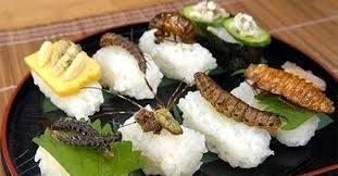 Novel food- utilizzo insetti in campo alimentare